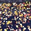 落ち葉も色とりどり