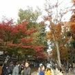 秋深まる井の頭公園!
