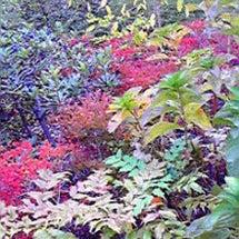 カラフルな秋…