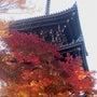 Kyoto sigh…