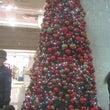 クリスマスツリーを探…
