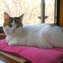猫と暮らすアトリエ生…