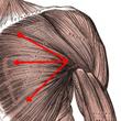 【大胸筋の筋トレ方法…