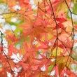 秋色の中で色んな表情…