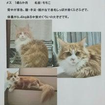 ~猫さんを探されてま…