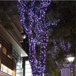 ✾幻想的なブルーの光…