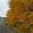 見渡す限り黄色の世界