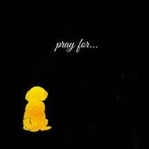 pray for..…