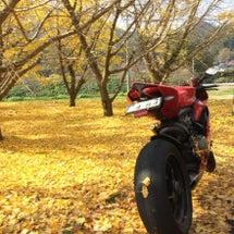 秋を探してる