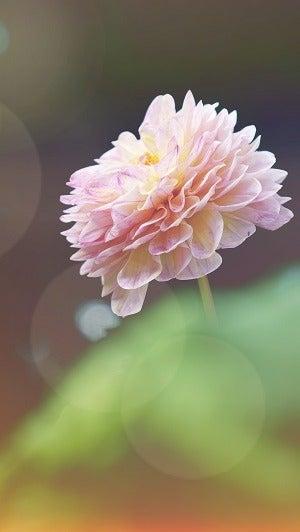 beautiful Flower (1)