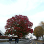 駒沢公園の秋