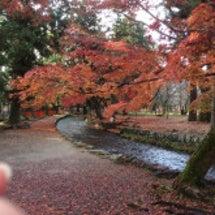 紅葉 裏庭、上賀茂神…