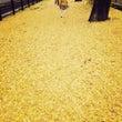 京都の紅葉は混んでま…