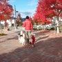 紅葉散歩も楽しい季節…