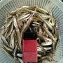 小野川湖ワカサギ釣り…