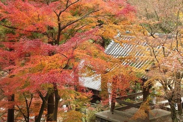 白峰寺の紅葉