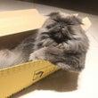 猫はオウチハコで丸く…