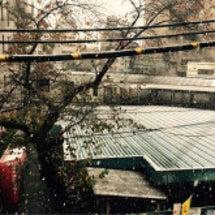 雪ですやん!