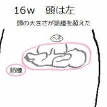 16w3d つわり終…