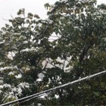 東京54年ぶりの雪。…