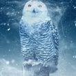 雪を見て感情が動いた…
