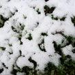 11月の初雪は54年…