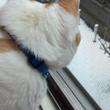 ネコの風助 11月の…