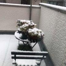初雪!驚く前までの日…