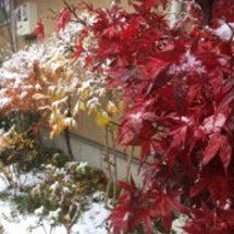 紅葉と雪の美しさ