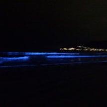 NIGHT WAVE…