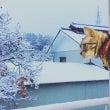 長野で初雪。