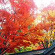 ■紅葉の高野山にて~…
