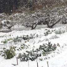 異例の初雪、明朝も危…