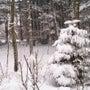 軽井沢は大雪警報、東…
