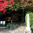 東京は雪、京都は紅葉…