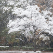 早雪のよこはま
