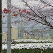 雪と紅葉とあかま二郎