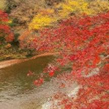 ギリギリの紅葉