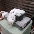 初雪とパチマガ
