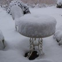 11月の雪…想定外の…