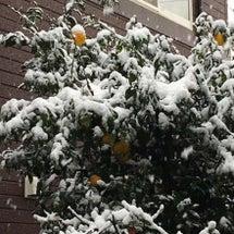 慣れない大雪(+o+…