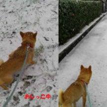今日は雪でした