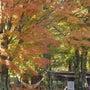 富士山の絶景と紅葉を…