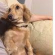 犬のしつけ お話の習…