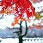 11月の雪と紅葉