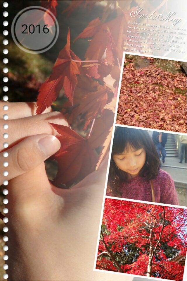 IMG_20161124_223839004.jp</a>g<br><br>手を伸ばした先には真っ赤な楓の葉っぱ<br>しゅくくん話せなくても木々の季節の変化を全身で感じてくれたらそれでいいんです。<br>しゅくくんねその場はしーらないっって見向きもしない態度や無表情なんだけど家に帰って寝る前の布団の中で一日の出来事の一番印象に残ったこと大笑いでうれしいよーって教えてくれるんです<img width=