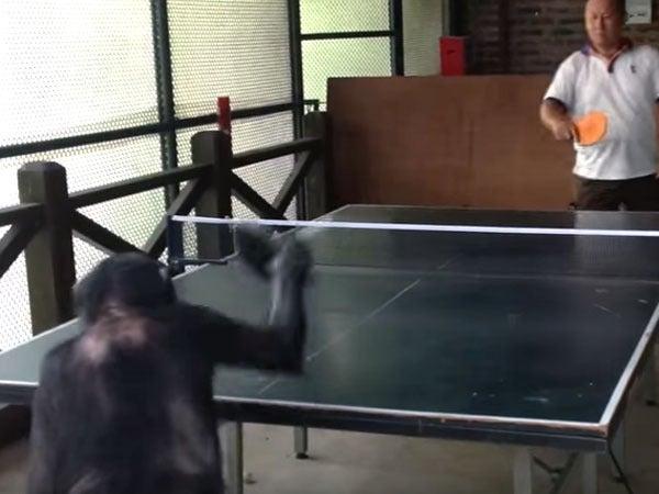 卓球をするサル
