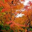 宮島の紅葉はやっぱり…