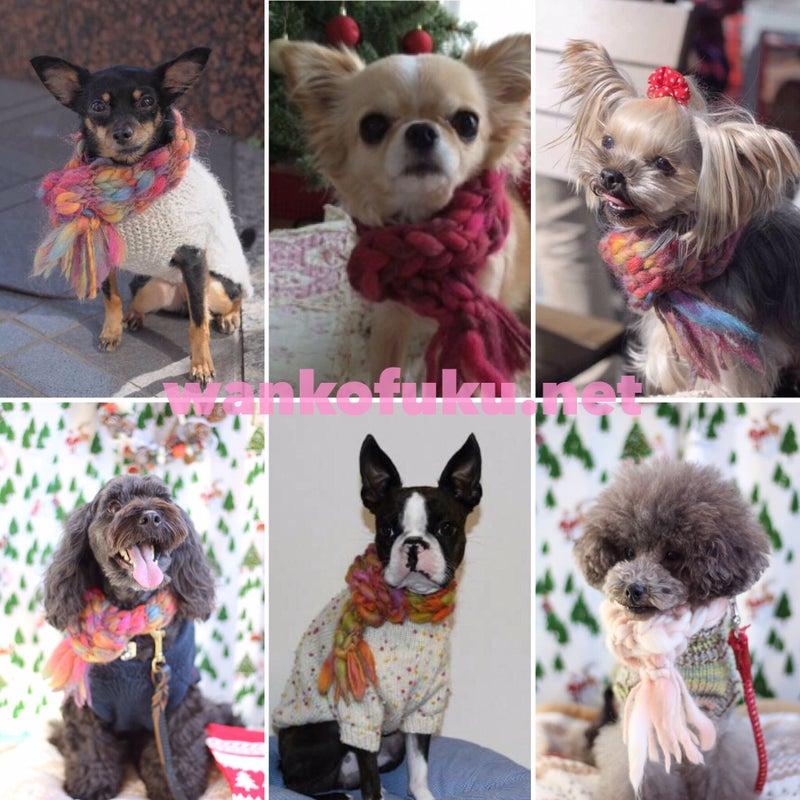 犬,ニット服,編み物教室