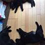 子犬達のお昼寝写真